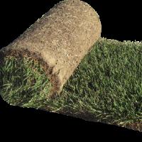 Kentucky Blue Grass JvonConstruction